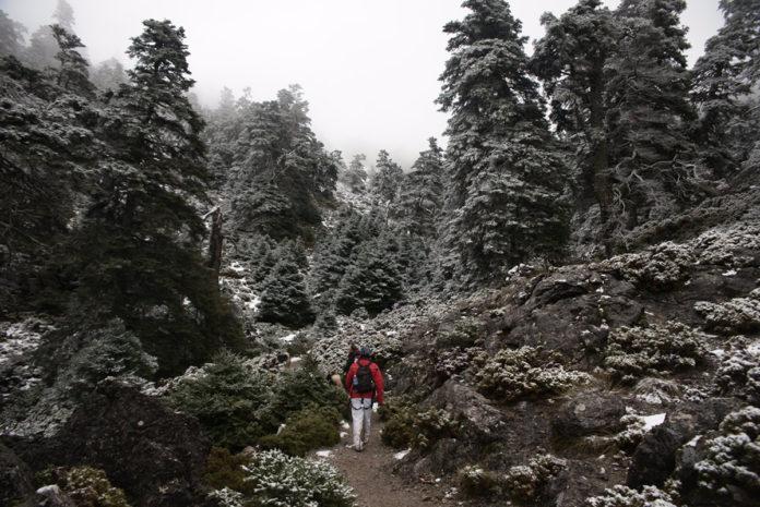 El Senado aprueba la declaración del Parque Nacional de la Sierra de las Nieves